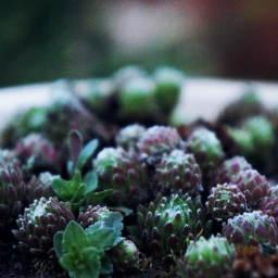 nature macro photography minimal