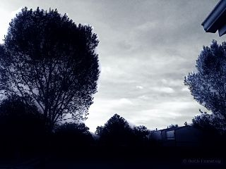 monochrome dailyinspiration paphotochallenge ruthfeiertag black