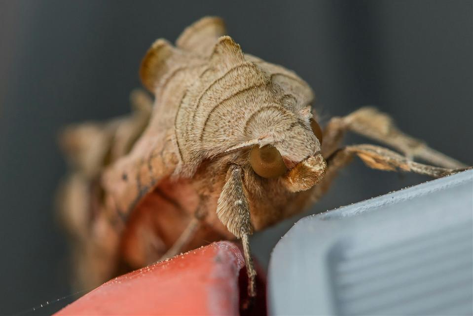 Insekt auf Gartenschlauch