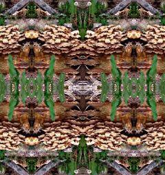 mirrored dailyinspiration paphotochallenge ruthfeiertag fungi