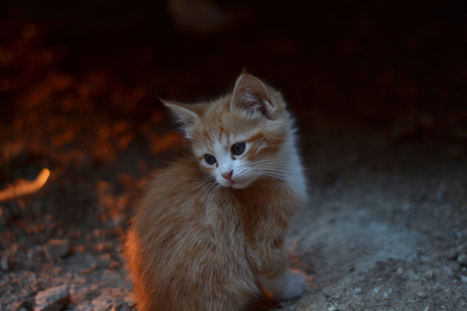 one last cat picture for now ;)))))  #photography #warm #kitten #cat #CUTE #AF #AHHH