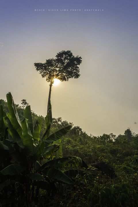guatemala nikon ceiba nature travel