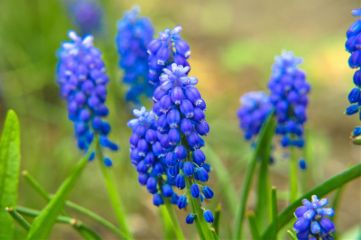 art spring nikon nikond90 flower