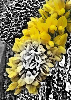 flower northernireland giantscauseway
