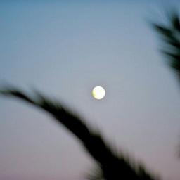 idk sushine moon