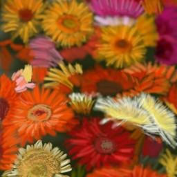 wdpflowerfield flowers