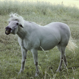 horse funny emotions petsandanimals nature