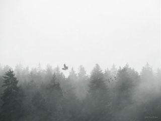 fog trees clipart nature minimalism