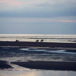wppshowmethesea photography contrast horses