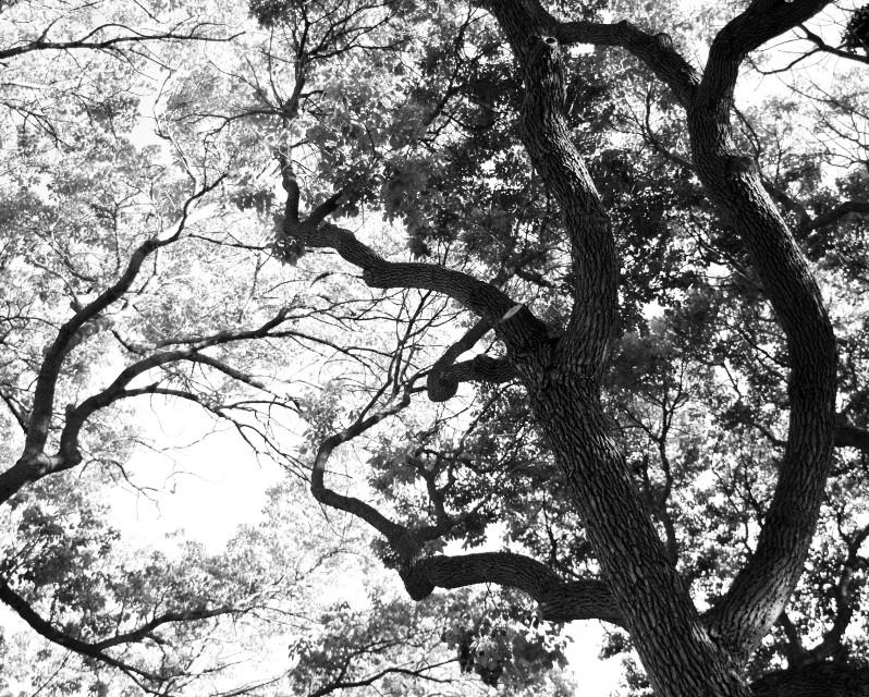 #photography  #blackandwhite  #nature  #trees