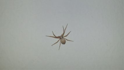 freetoedit spider white petsandanimals nature