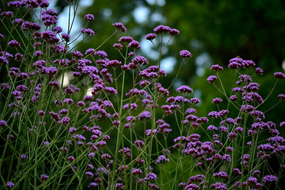 #flower #power #nature #green #park #peaceful
