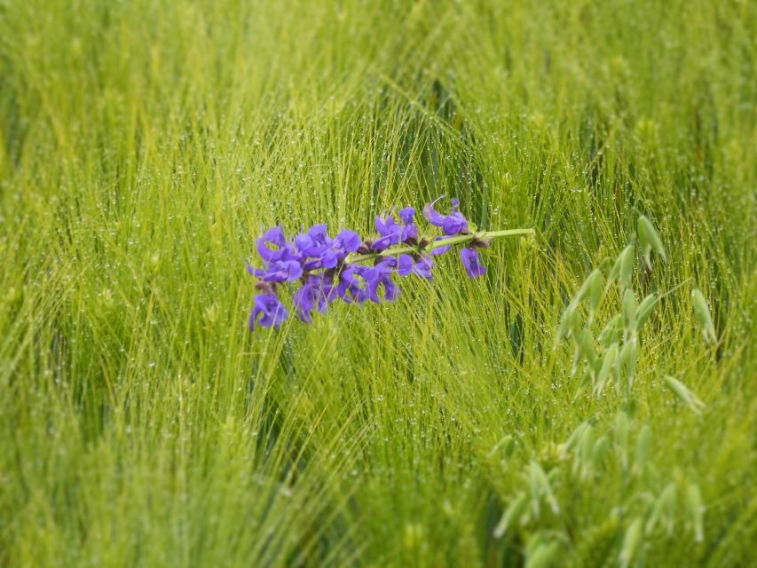 magische Blume