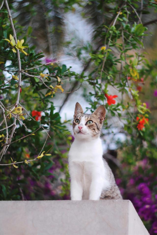 #FreeToEdit  #cat #nature #bokeh #portrait #nature #green #eyes #cute