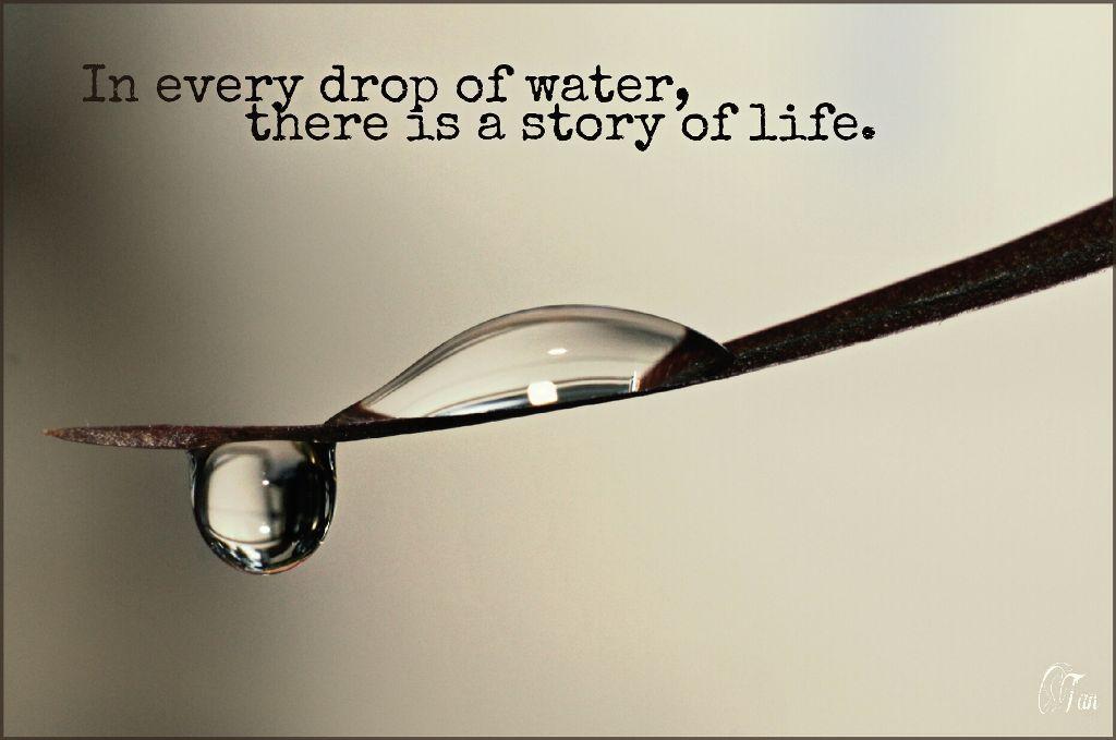 Quote by Leena Arif  #water  #drop  #leaf #life  #quotesandsayings #FreeToEdit