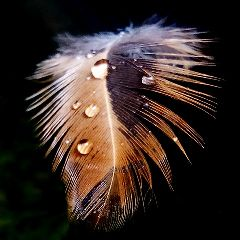 photography feather rain raindrops nature