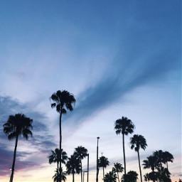 summer minimalism palmtrees
