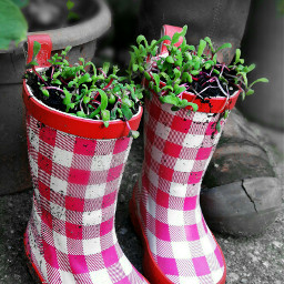 rainboots nature colorsplash mygarden photography
