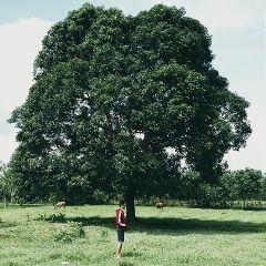 freetoedit trees green buffalo travel