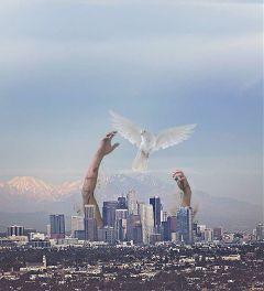 freetoedit bird hand city run