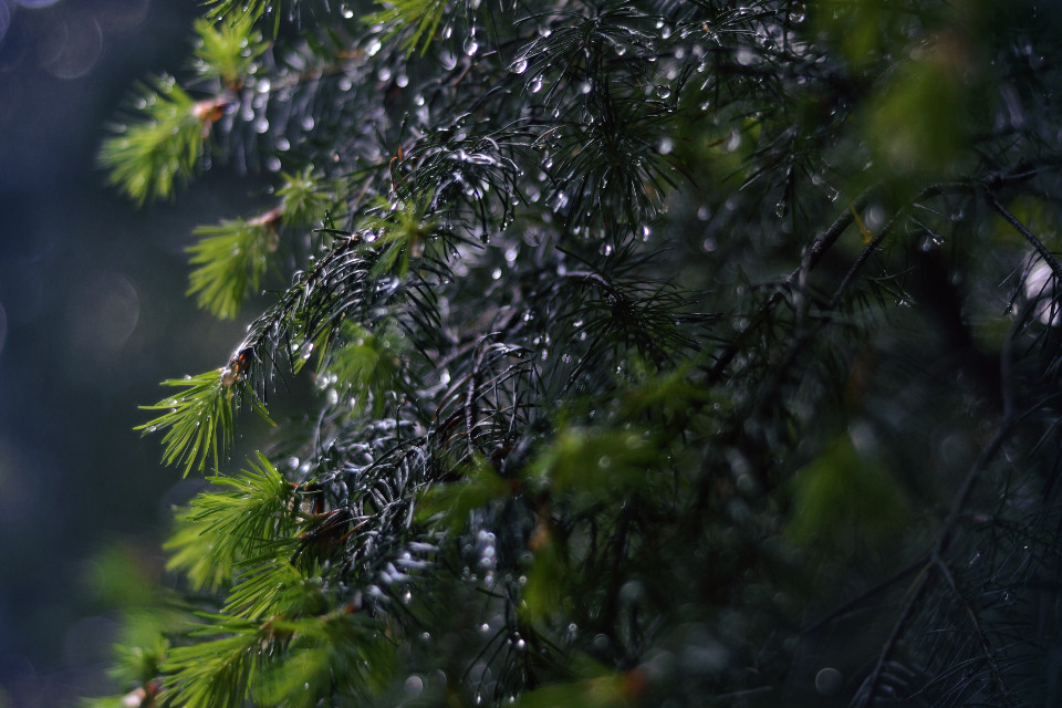 more drops !!    #water #drops #drop #droplet #waterdroplets #cooltone #cooltones #cold #rain #forest