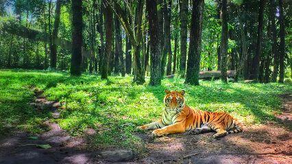 lion tiger interesting freetoedit