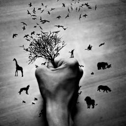 human animal blackandwhite nature photography