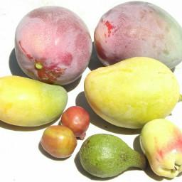 magos limones manzanas aguacates ciruelas