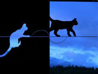 freetoedit catblack