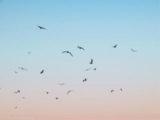 freetoedit photography nature sky birds