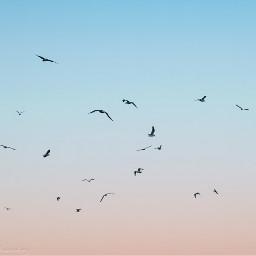 freetoedit photography nature sky birds