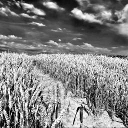 blackandwhite monochrome nature naturelovers naturephotography