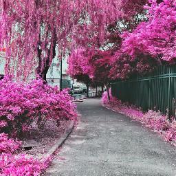freetoedit pink nature beauty japan
