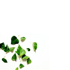 white green minimalism simple