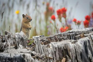 nature wildflowers chipmunk