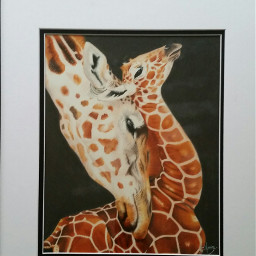 artoftheday giraffe animals colorpencil artistic