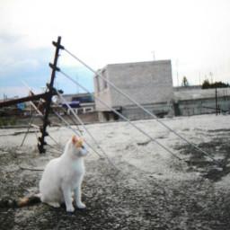 catsphotography cats