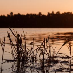 oldphoto photography nature summer sunset