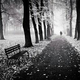 freetoedit old_photo blackandwhitephotography alonetime forestpark