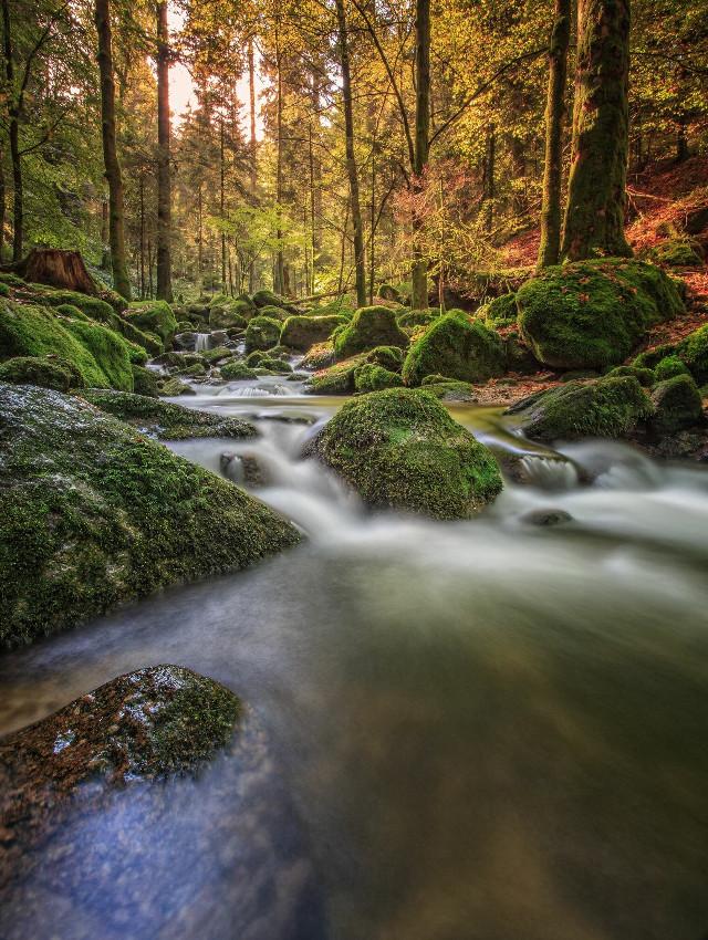 - golden creek -  Gertelsbach, Blackwoodforrest, Germany #nature #photography #landscape #mystic #nationalgeographic  @nationalgeographic