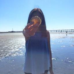 wppsummerblues beach seashell