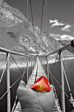 freetoedit hangingbridge blackandwhite travel hand