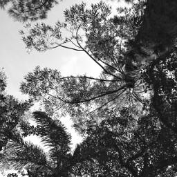 blackandwhite black naturephotography natureza naturelover