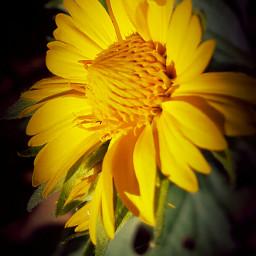 pencilart love flower colorful blackandwhite