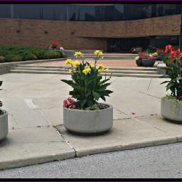 flowers mycity myphotography
