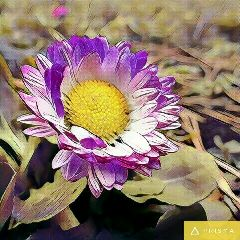 freetoedit cute flower nature photography