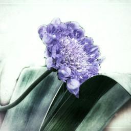 flower gradienteffect texturemask minimalism