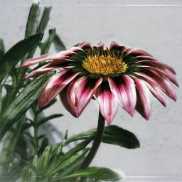 flower gradienteffect nature naturephotography garden