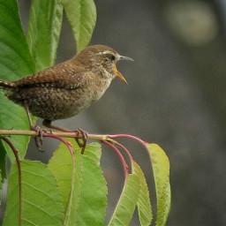birds petsandanimals summer naturephotography wildlife