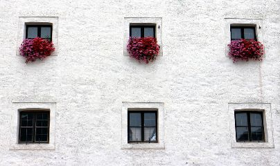 freetoedit wall white flowers window